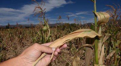 Millonarias pérdidas por la sequía en el Sudoeste de la Provincia