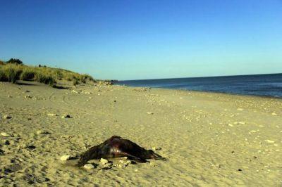 Necochea: preocupa la aparición de 37 los lobos marinos muertos en el Puerto Quequén
