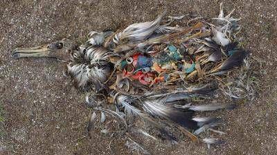Crece la preocupación por presencia de residuos plásticos en las playas del Golfo