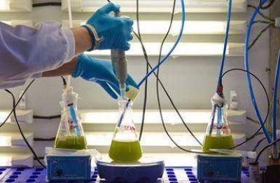 Bioadhesivos a partir de residuos de producción de biodiésel con microalgas