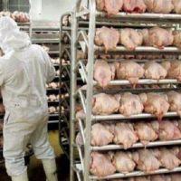 Más destrucción de empleos: 20 despidos en la avícola ServiAves