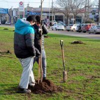 Recuperación de espacios verdes: continúa con la forestación de la Avenida 59