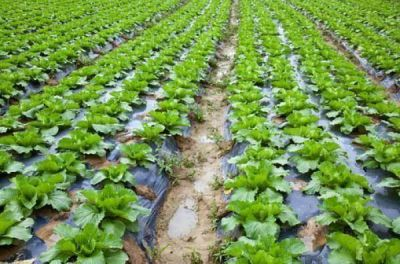 Analizaron la problemática del uso del agua en la zona productiva de Poblet y Oliden