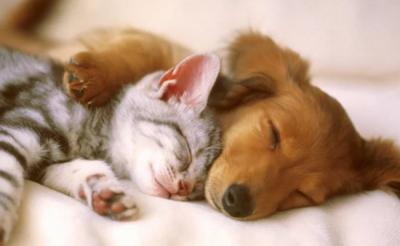 Córdoba ya tiene su primera obra social para mascotas