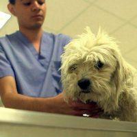 Vuelven a alertar sobre los riesgos de residuos biopatogénicos veterinarios