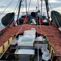 Accidentes laborales: las pesqueras enfrentan juicios por $ 400 millones