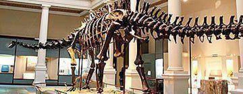 Bonistas quieren embargar fósiles de dinosaurios argentinos por deuda
