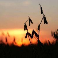 El bajo nivel de los ríos, otro revés para la industria agrícola