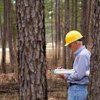 Ingenieros forestales, fundamentales en la gestión y preservación de los bosques y su entorno