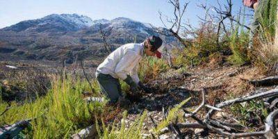 PAE contribuye a la recuperación del bosque nativo de Cholila