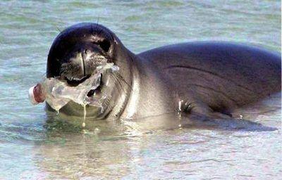 Aseguran que para el 2050 el peso de los plásticos en los mares superará el peso de todos los peces