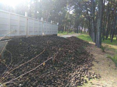 El municipio entregará 30 toneladas de papa