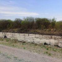 Animales muertos, olor fétido y una ruta hundida: el asqueroso río de efluentes de Santiago del Estero