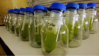 Con microalgas, investigadores de la UBA logran reducir la contaminación en el Riachuelo