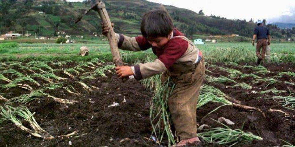 Horror: Gerardo Morales habilitó el trabajo infantil en Jujuy
