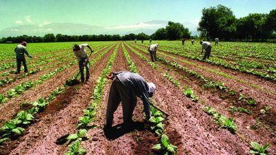 Negocian el bono de fin de año para trabajadores rurales