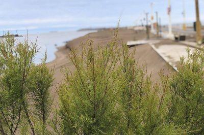 Puerto Quequén desarrollará obras en las costaneras de Necochea y Quequén