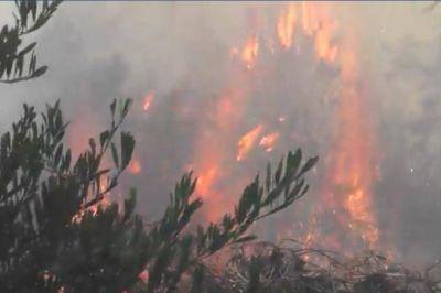 El incendio de un basural afectó el bosque de Villa Gesell, alarmó a vecinos y turistas