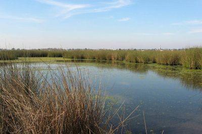 Humedales: pese a que previenen inundaciones, están poco protegidos