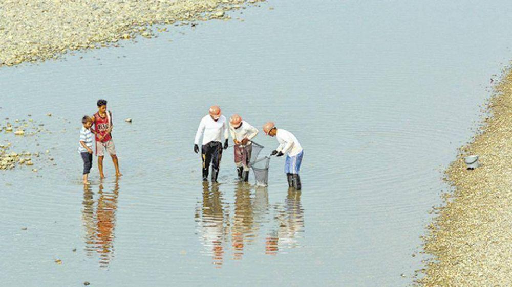 Un crimen ambiental en el río Cauca