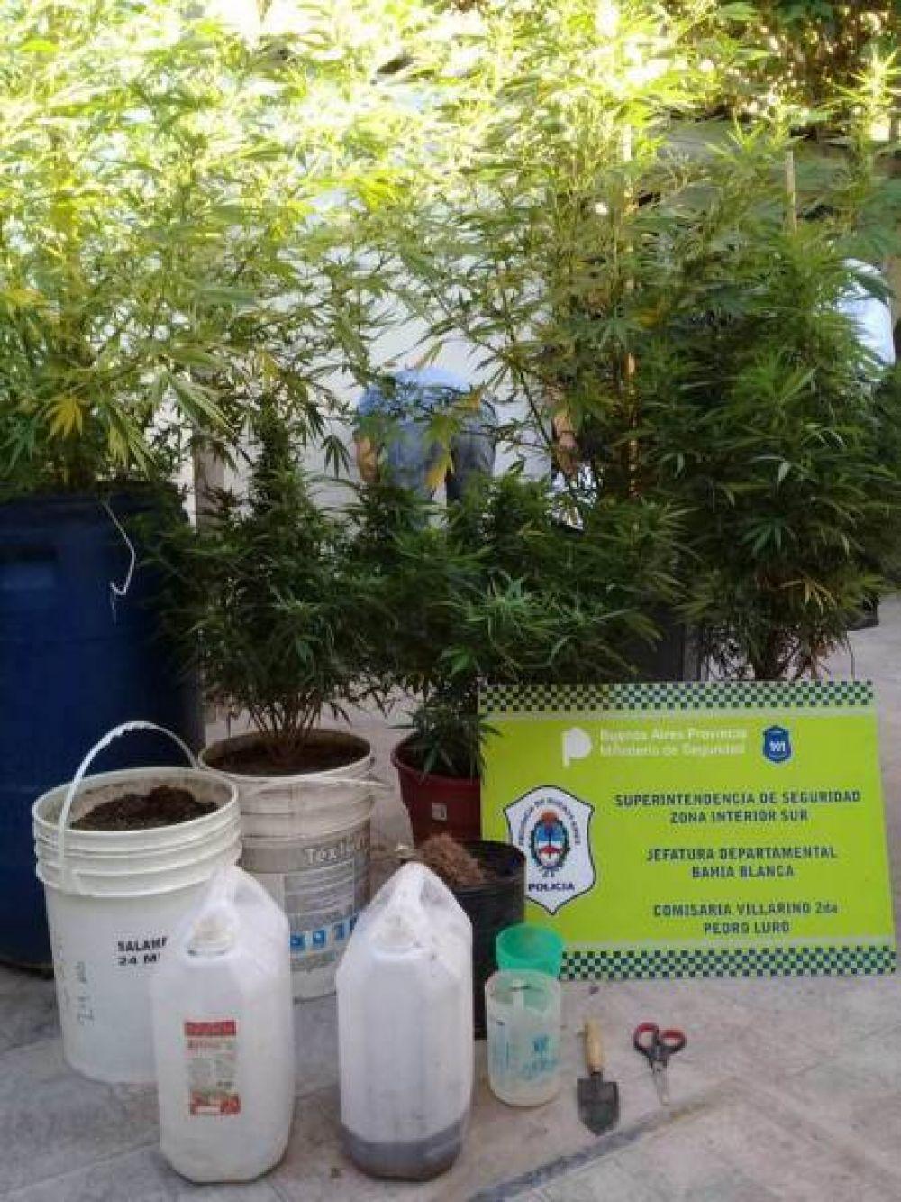 Luro: hallan plantación de marihuana en la casa de un primo de la ex intendenta