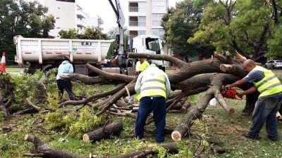 Recogieron más de 1.500 toneladas de deshechos que dejó el temporal en La Plata