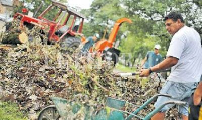 Retiraron mil toneladas de ramas y árboles caídos por el temporal