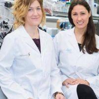 Cáncer: anuncian que lograron inhibir en ratones una proteína clave en el desarrollo de los tumores