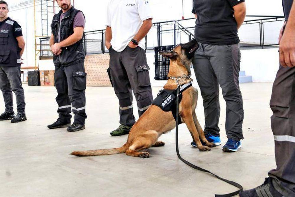 Cómo entrena la AFIP a los perros que detectan dólares y drogas