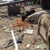 Proteccionistas y un reclamo urgente por la situación en un basural local