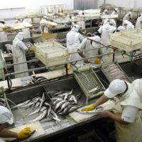 Conserveras de pescado en crisis: