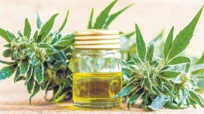 El aceite de cannabis lo provee la obra social