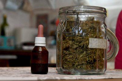 El uso del cannabis medicinal crece en Mar del Plata a la par del autocultivo