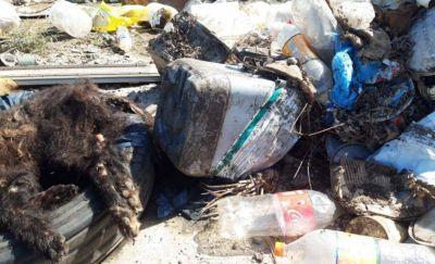 Denuncian a Ronda por la quema de bidones con agrotóxicos en Vivoratá