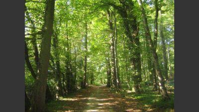 Transfieren recursos para el cuidado de bosques