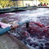 Distrito peronista refuerza el cuidado ambiental y clausura fábricas
