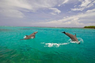 Día de la Tierra: la paradisíaca isla en la que los delfines le ganaron al plástico