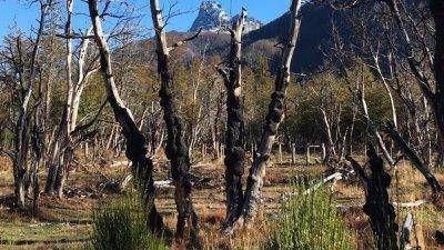 PAE y el Ministerio de Ambiente avanzan en la recuperación del bosque de Cholila