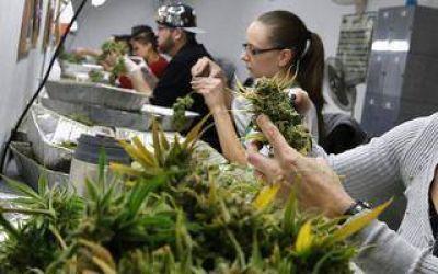 Cannabis medicinal: el director regional de Inta detalló cómo será el viaje a Estados Unidos con Salazar