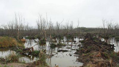 Los humedales de La Plata están contaminados con agroquímicos