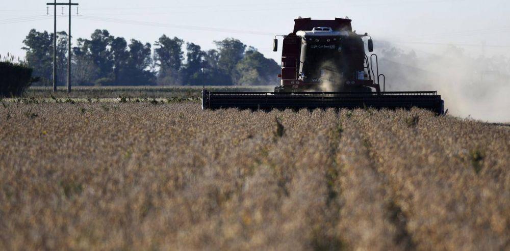 La soja cayó al menor precio en 10 años y la cosecha pierde US$ 3.000 millones