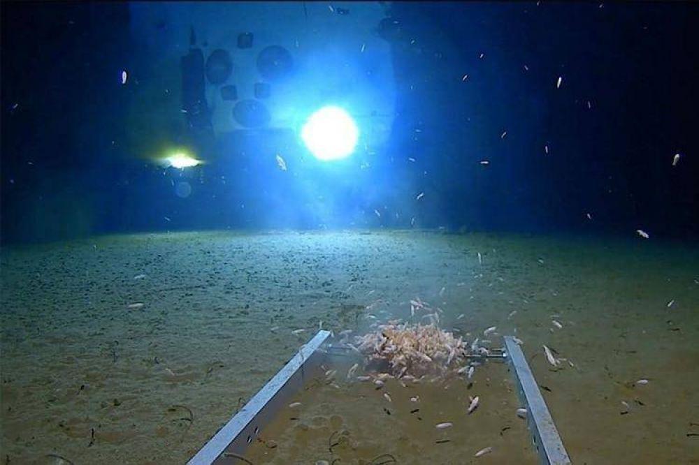 Científicos llegaron al fondo del mar, donde ningún humano había estado antes: encontraron basura
