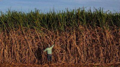 BP y Bunge se asocian para crear megaempresa de biocombustible en Brasil