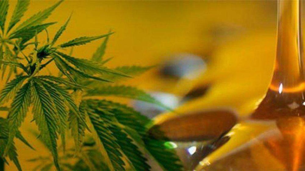 Elogian la decisión de ceder a la UNMDP marihuana incautada