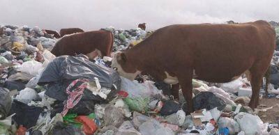 Sancionarán al Municipio por el basural a cielo abierto y la quema de residuos