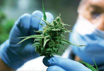 Uso medicinal del cannabis: la experiencia canadiense