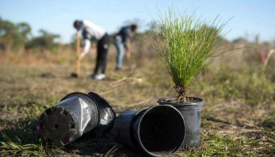 Ambiente tendrá 31 % más de presupuesto en 2020