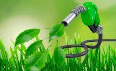 Biocombustibles: culpan a la falta de precios por la reducción de compras