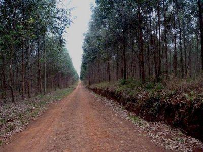 Protección ambiental: proponen ley que limite plantaciones foresto industriales en zonas urbanas y cursos de agua