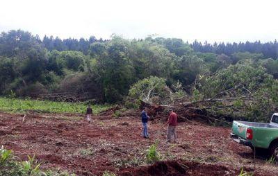 Aplicarán multa millonaria por desmonte en cercanías del Paraje Paraíso, en San Pedro
